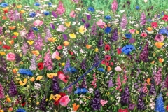 Wildflowers-by-Susan-Cheslin