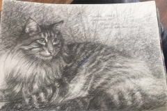 Silver Tabby by John Young
