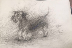 Czesky the Terrier by John Young