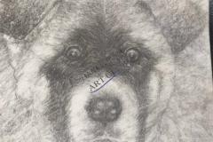 Mya the Akita Dog2 by John Young