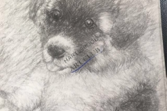 Mya the Akita Dog by John Young